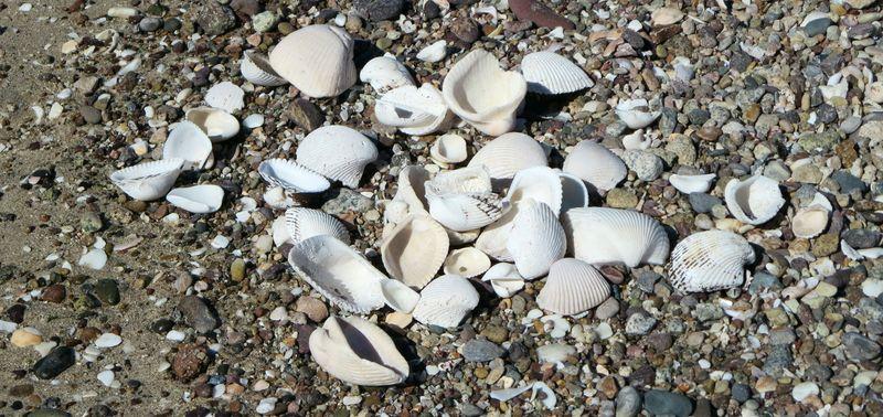 Forgot my shells