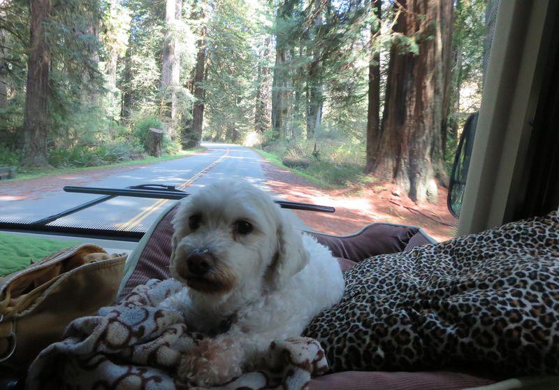 Bert with redwoods in the bg