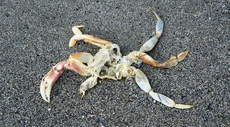 The rest of the crab