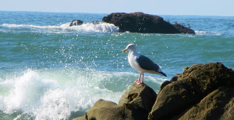 This gull was posing
