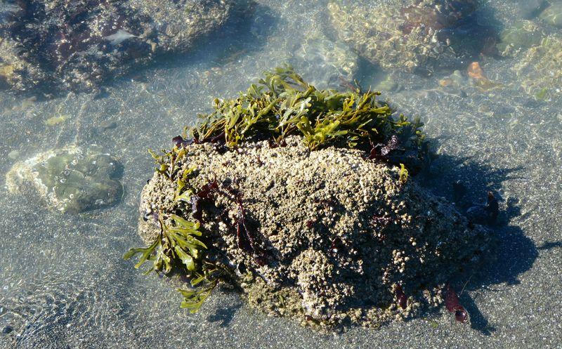Stuff growing on the rocks