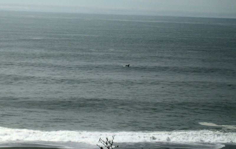 Whale tail in the distance