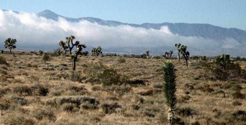 More cool cacti