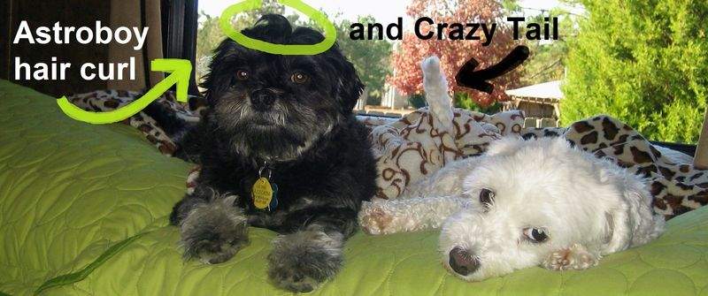 AstroMutt and Crazy Tail