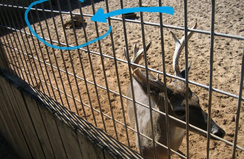 While we were saying hi to this deer, a turtle raced up from the back of the pen