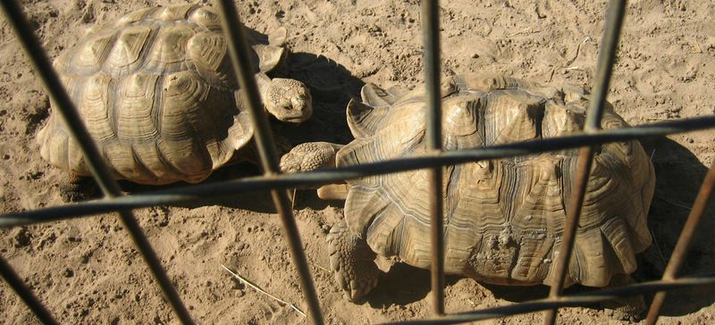 Turtles squared