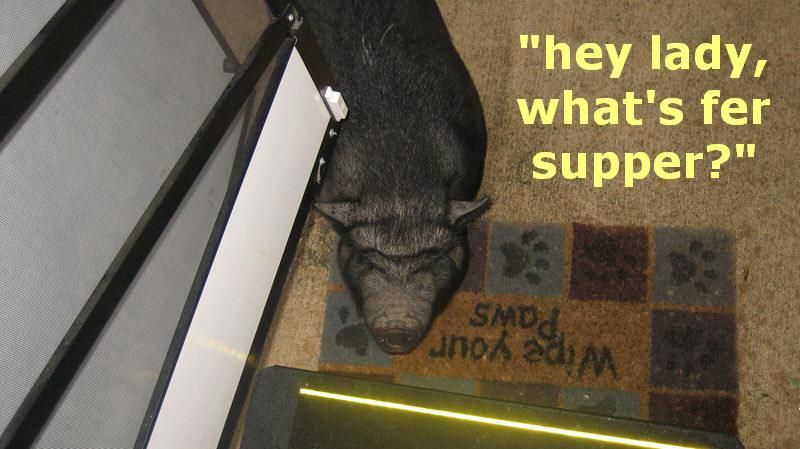 Piggy at the door