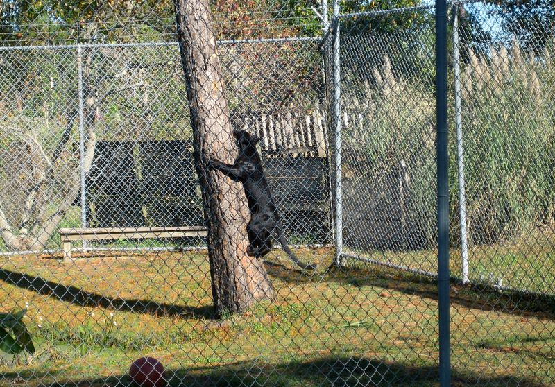 The black panthers were in a playful mood as well