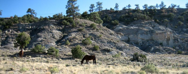 New Mex horse in the field