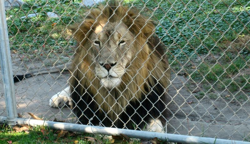 I was thisflippinclose to this lion