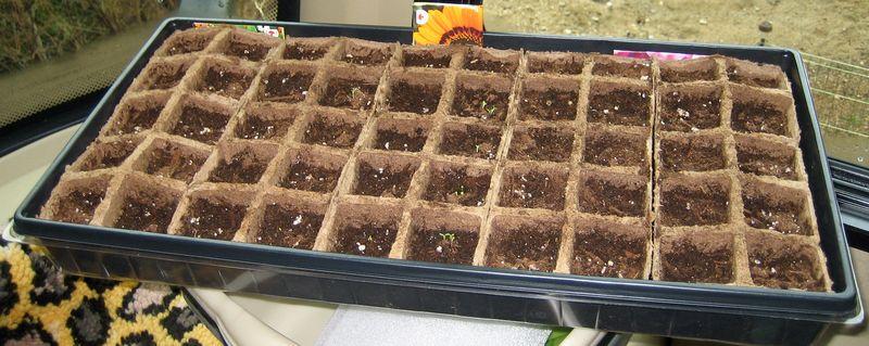 Seeds - week one
