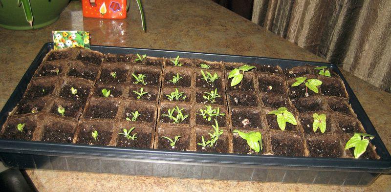 Seedlings - week 3