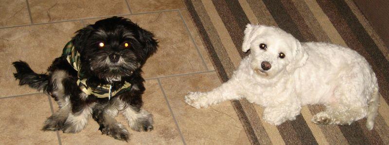 Pups on the floor