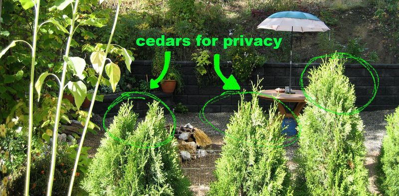 Cedars for privacy
