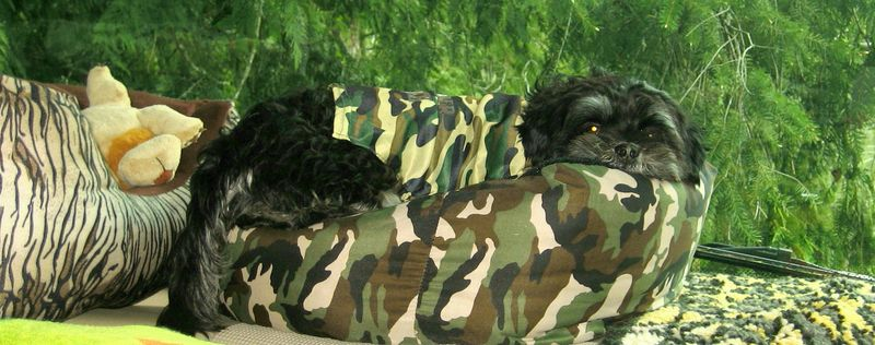 Can you see the camo pup