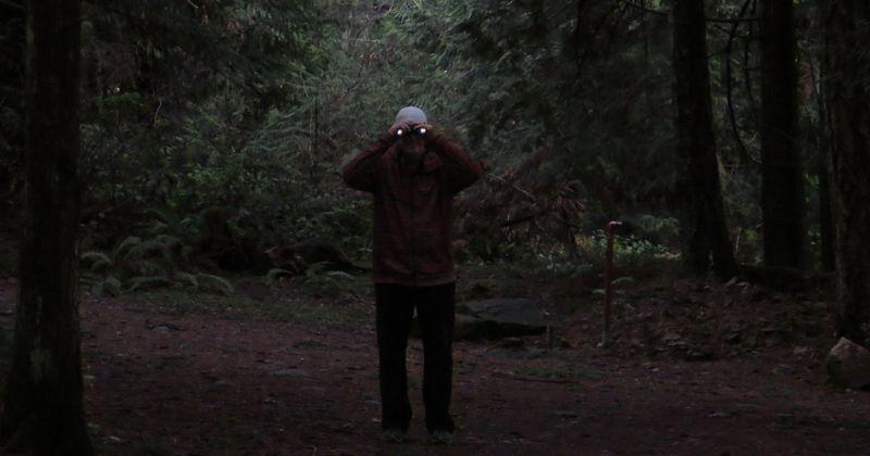Creepy forest stalker