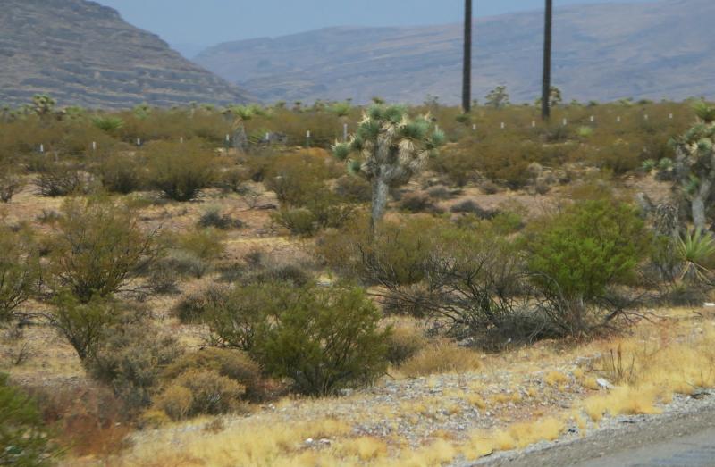 Desert scape