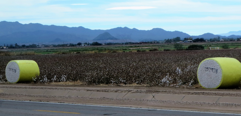 Bales of cotton along the highway