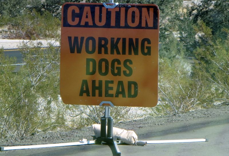 Working dogs ahead sign