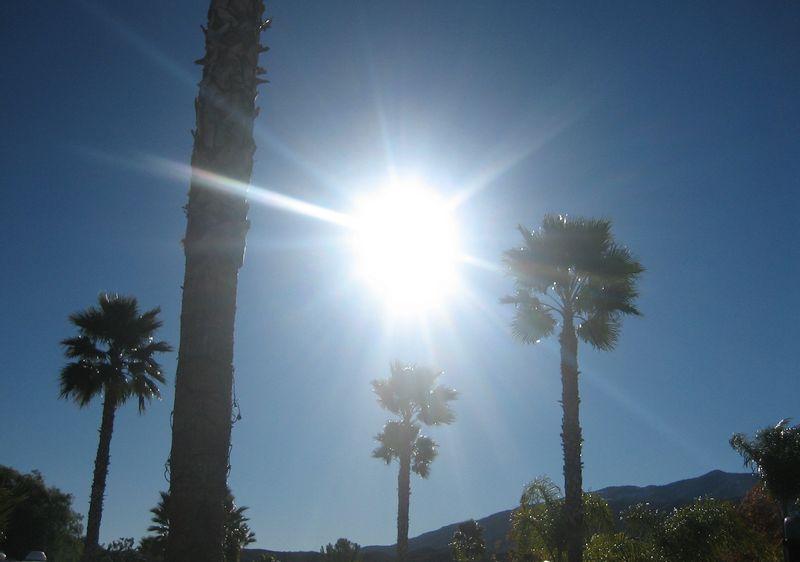 Palms and sunshine