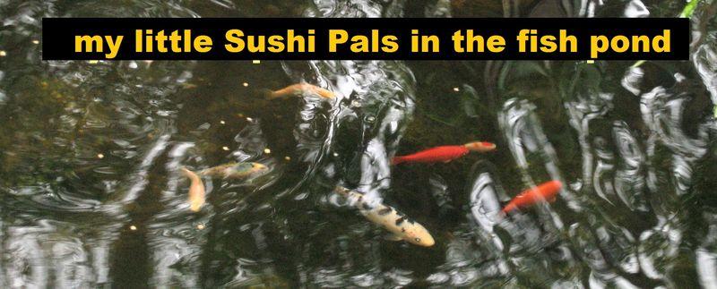 The sushi next door