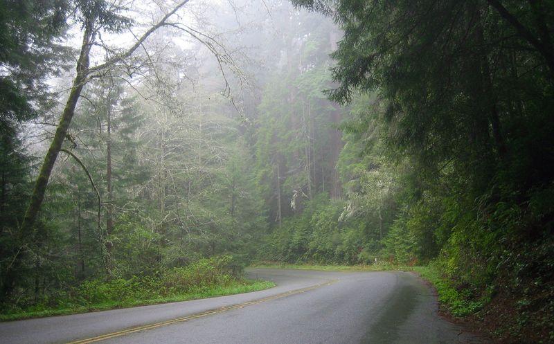 Heading into the mist