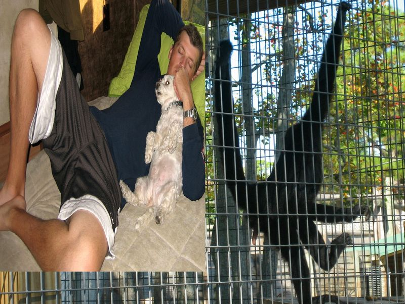 There are some similarities here - for example, both spider monkeys and My Fella are very athletic with extremely long limbs