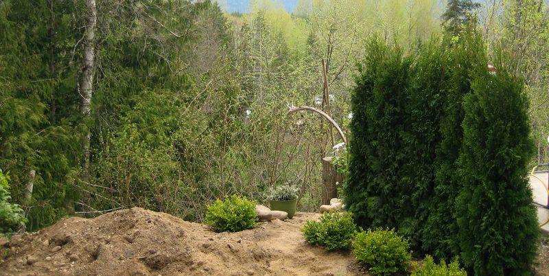 RV site reno with 5 cedars