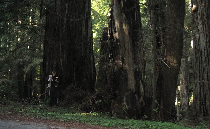 My Fella and the redwoods
