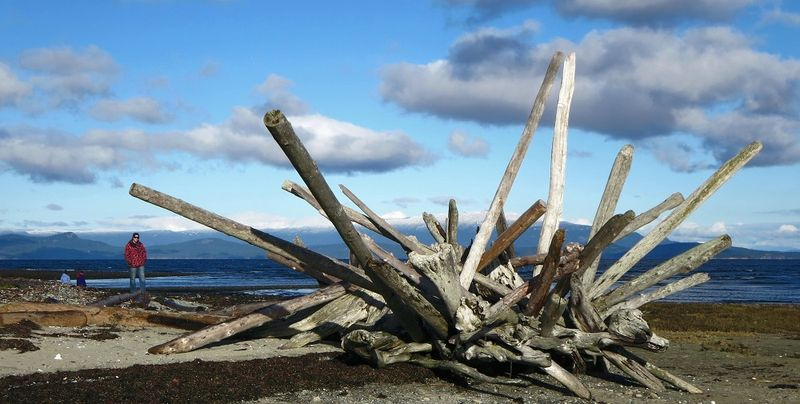 Artsy pile of driftwood