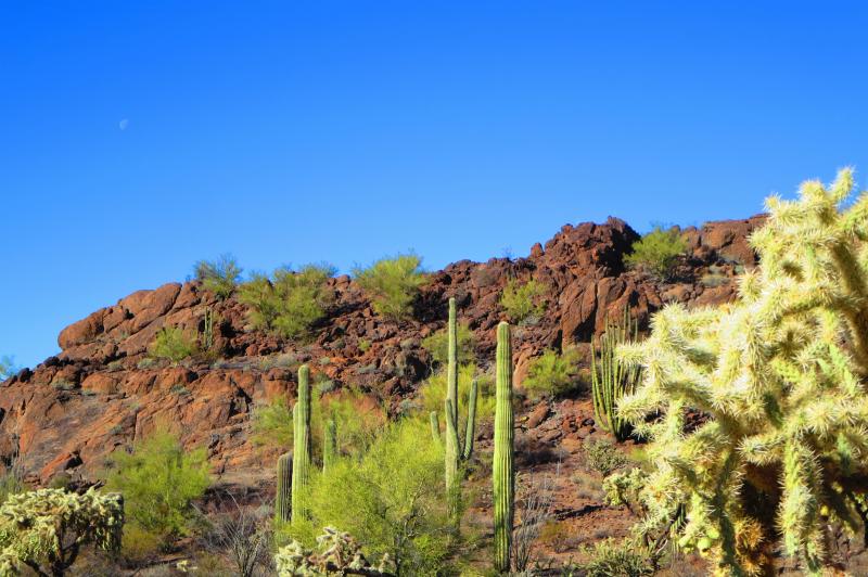 Mesquite saguaro jumping cholla organ pipe